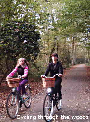 Cycling through the woods in Assen
